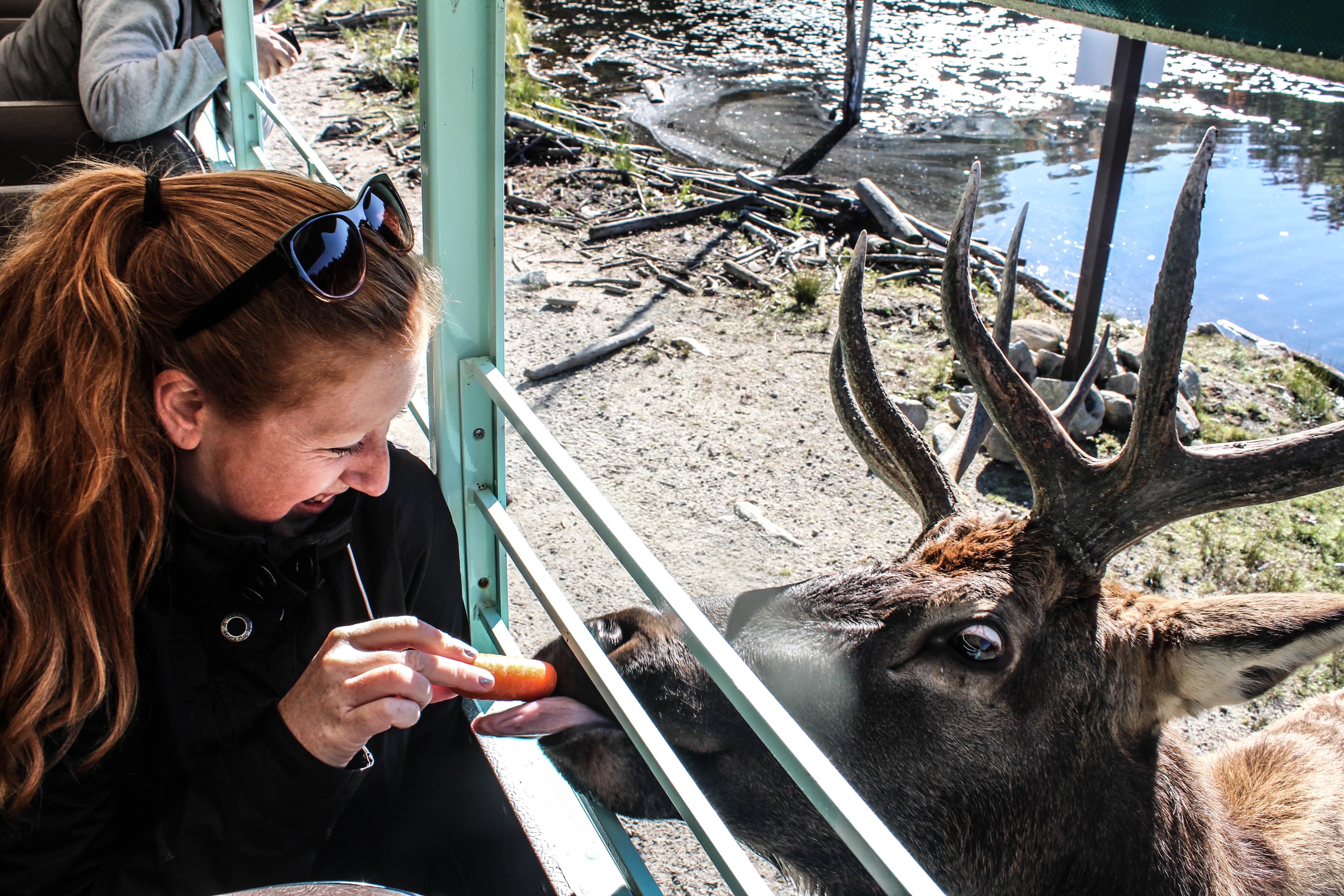feeding the elk at Parc Omega