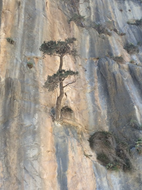 Trees growing from the gorge