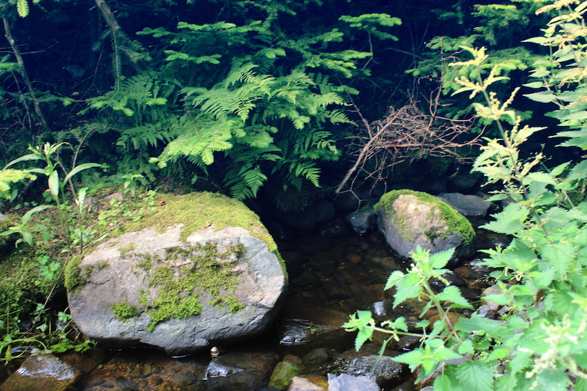Mossy rocks on Father Troy's Trail