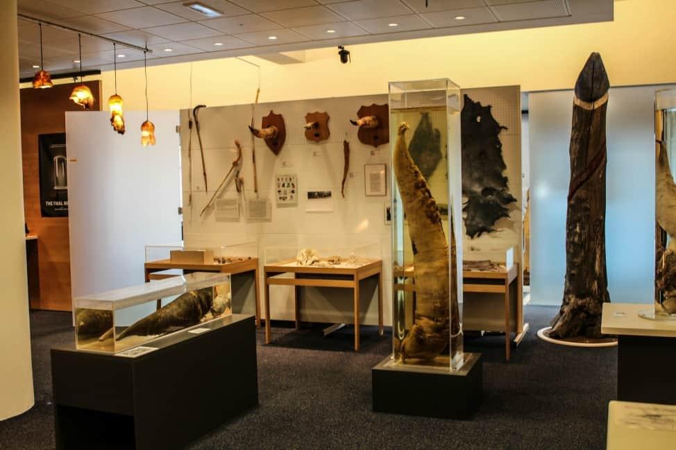 penis museum in Iceland