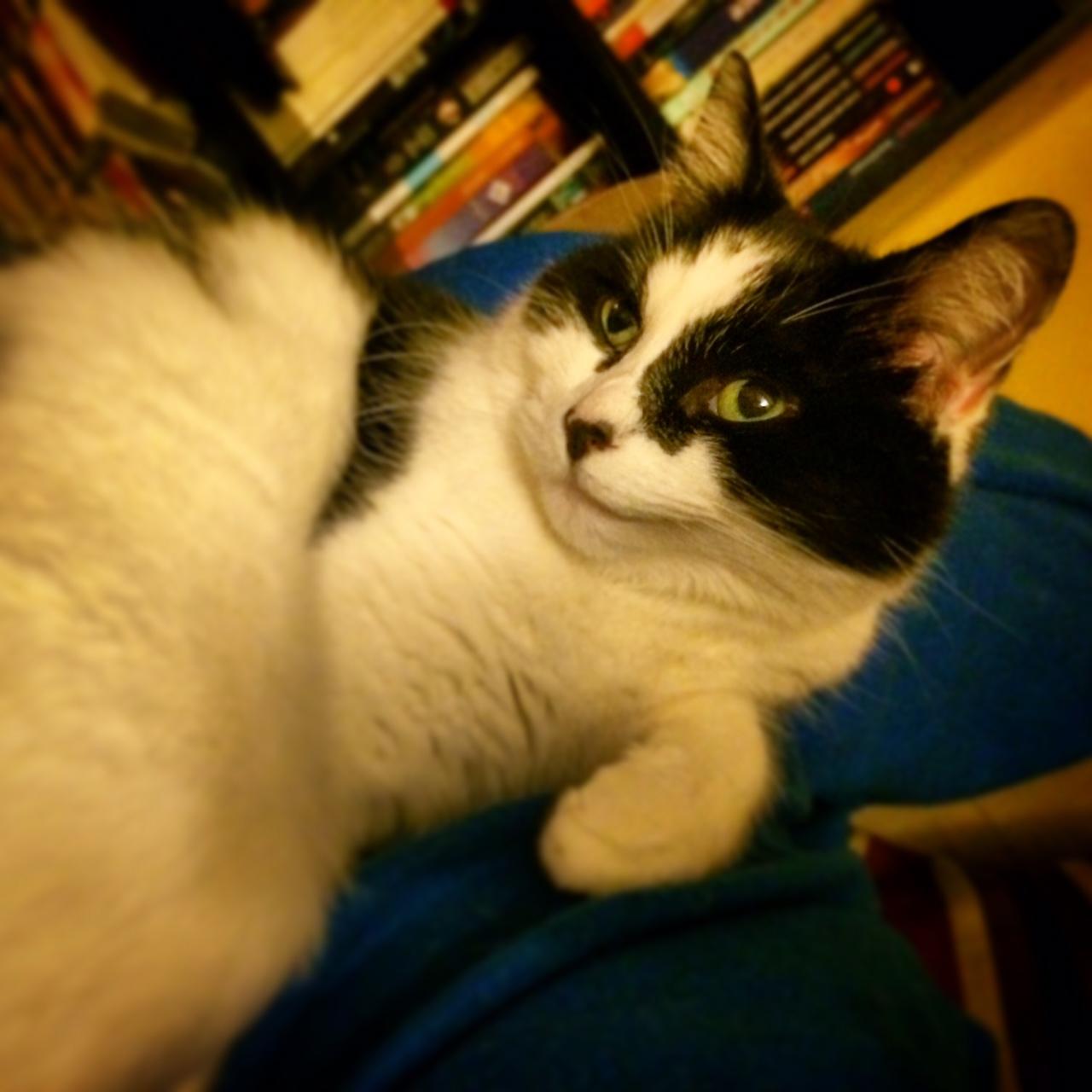 Bella the smug cat