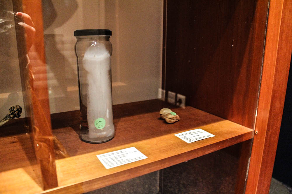 The ghost dick at Iceland's Phallological Museum