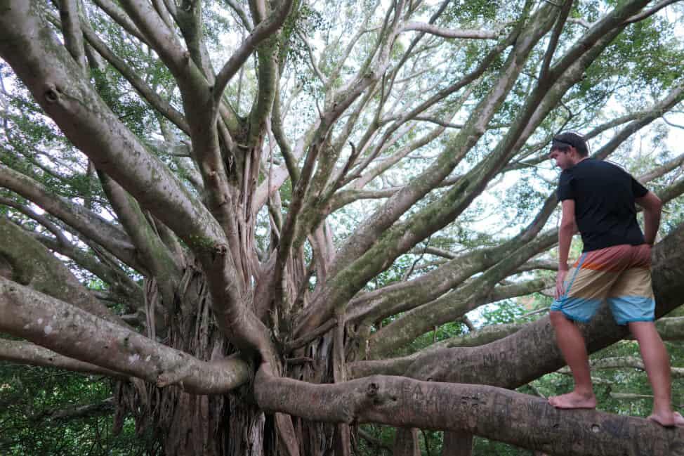 tree in Hana