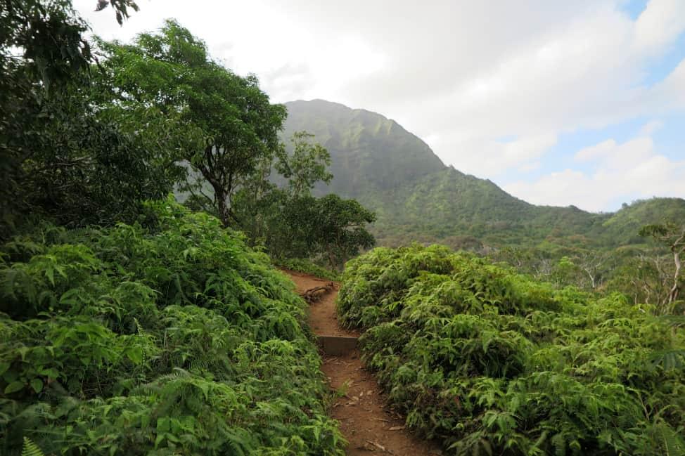 Hiking trail in Oahu