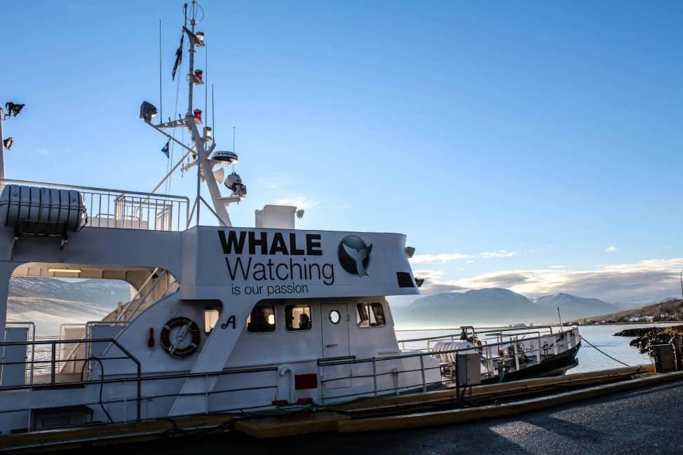 Whale watching tour in Akureyri