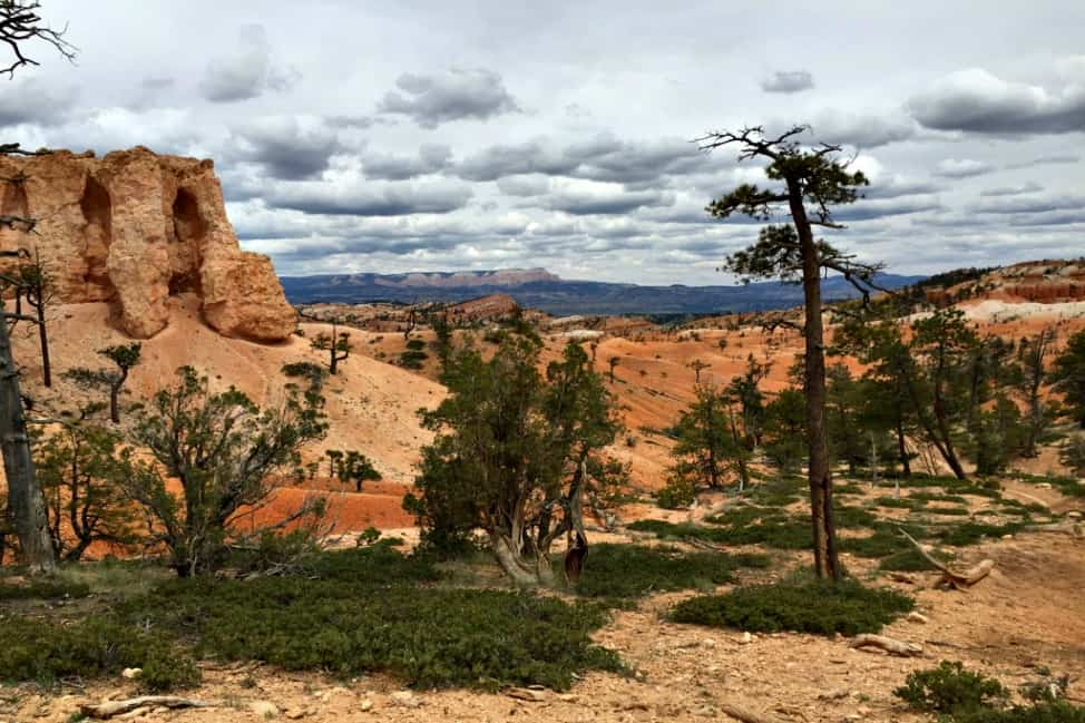 At the bottom of Bryce Canyon