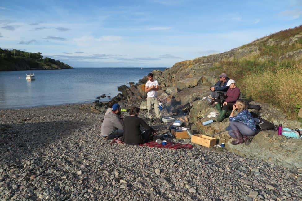 Newfoundland foraging