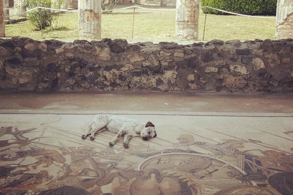 dog-at-pompeii