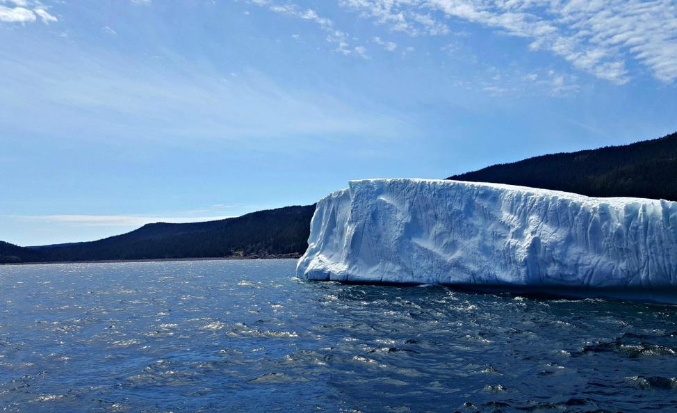 How to find icebergs in Newfoundland